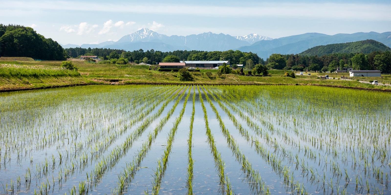 量 の お 米 ランキング 収穫